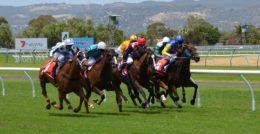 horse racing 358907 960 720 260x134 - HOME